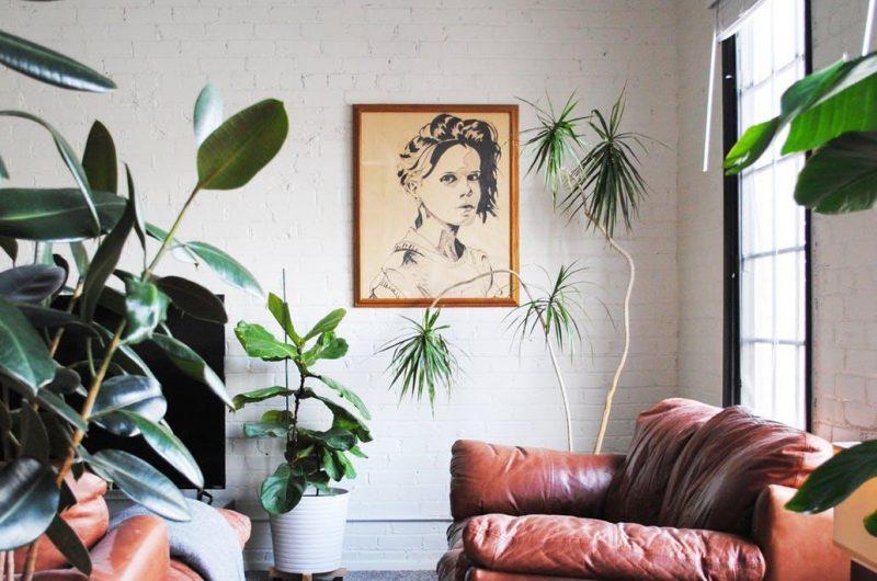 Plants and Polaroids